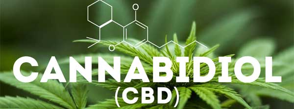 CBD Oil for Anxiety: Research, Dosage, Side Effects & More